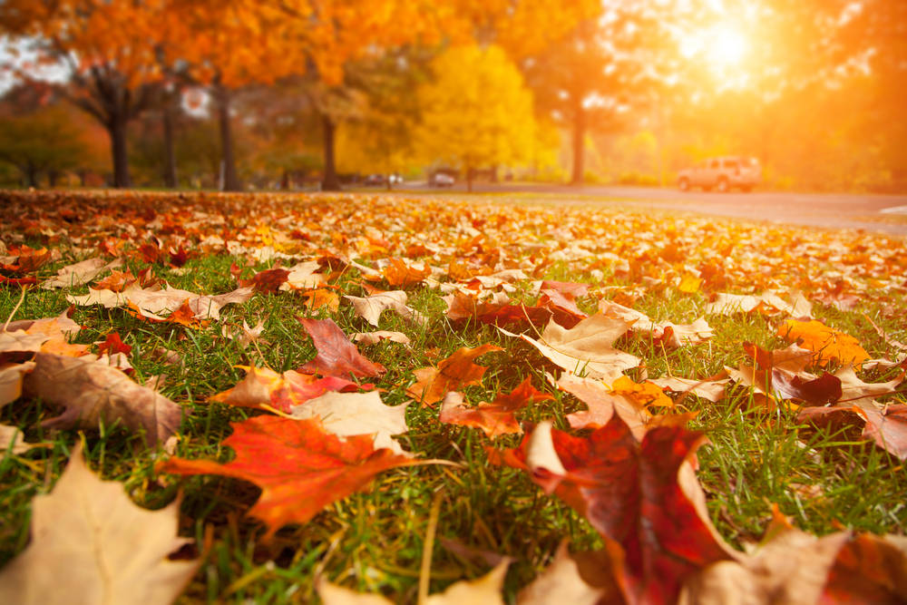 10 Fall-Themed Self-Care Ideas for You to Try | High Desert OBGYN